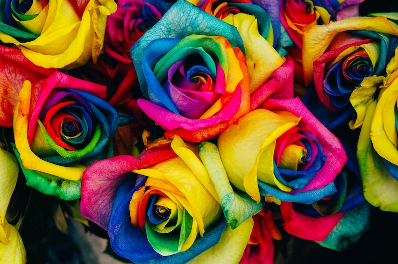 a bunch of very colourful roses