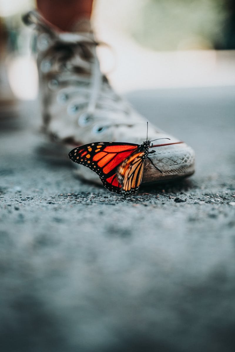 a blurred takkie with a very colourful butterfly on it.